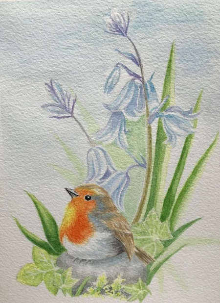 watercolour painting of robin and bluebells by Wendy Purvis
